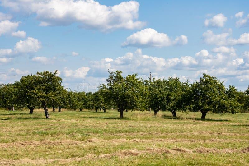 Grünes Feld und Apfelgarten unter dem blauen Himmel lizenzfreies stockfoto