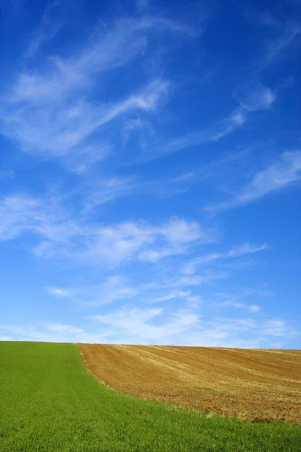 Grünes Feld und blauer Himmel stockbild