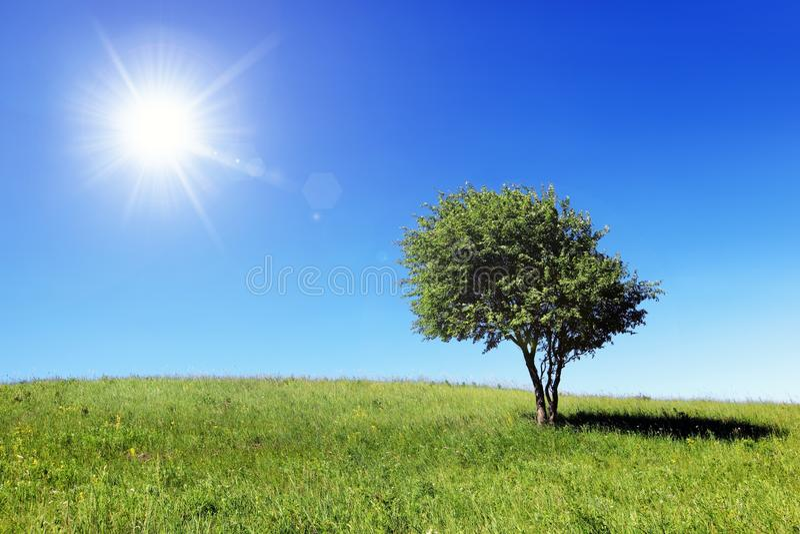 Grünes Feld und einsamer Baum stockbilder