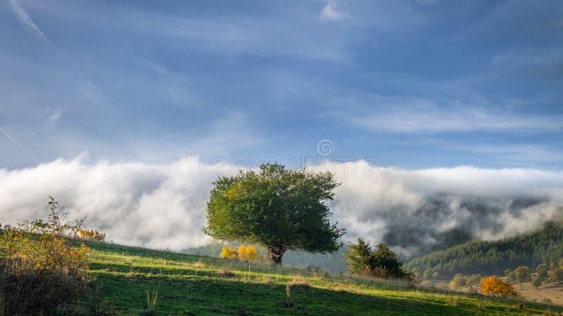Grünes Feld und schöne Sonnenuntergangsommerlandschaft lizenzfreie stockbilder