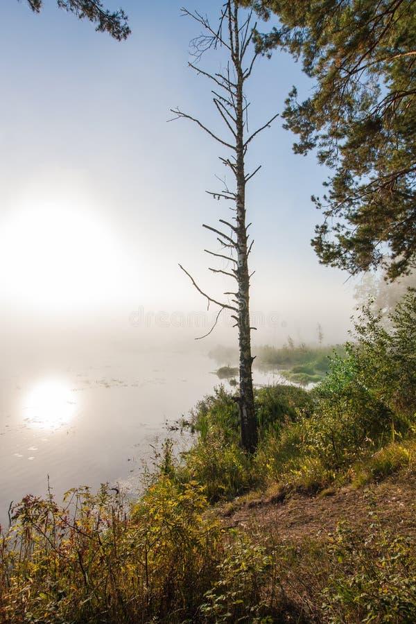 Grünes Feld und schöne Sonnenuntergangsommerlandschaft lizenzfreies stockbild