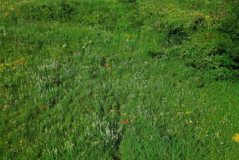 Grünes Feld, Vogelperspektive lizenzfreie stockfotografie