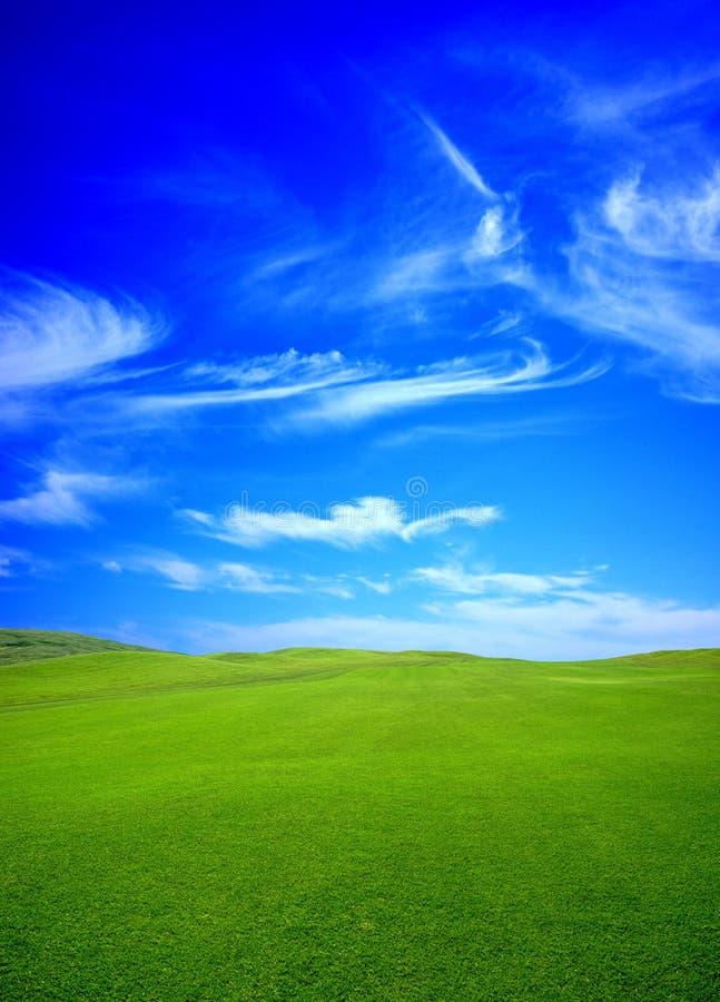Grünes fild am Sommer stockfoto