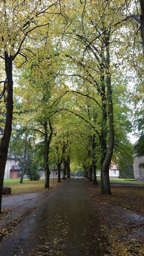 Grünes forrest Straße leeve stockfoto
