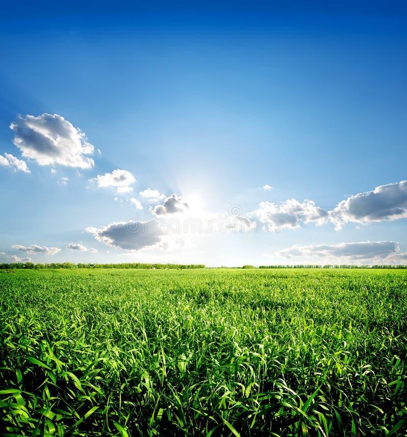 Grünes Frühlingsgras stockfoto