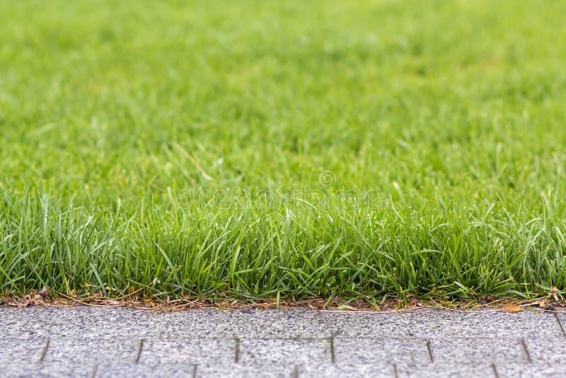 Grünes frisches Gras, das entlang grauem Weg des Asphalts, Beschaffenheit für Hintergrund wächst Grünes helles sonniges Rasen-, G stockbild