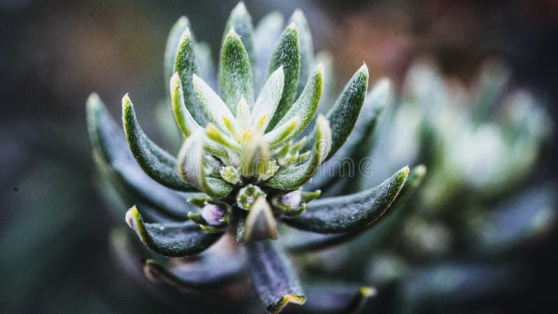 Grünes Frost an einem Herbsttag lizenzfreies stockfoto