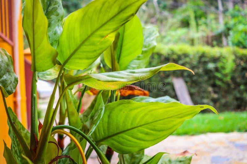 Grünes Gartenhaus des Blattes lizenzfreie stockbilder