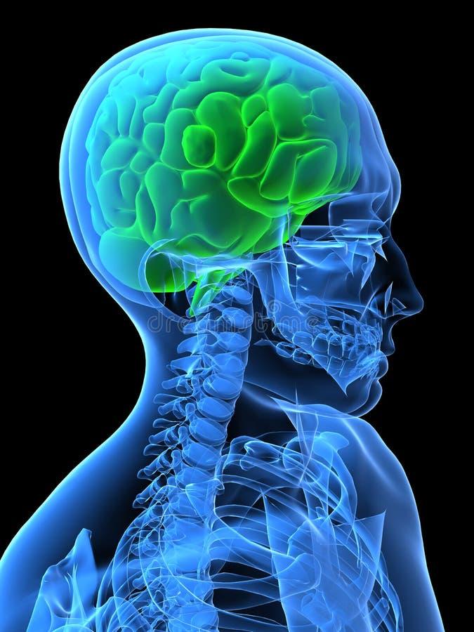 Grünes Gehirn lizenzfreie abbildung