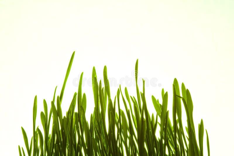 Grünes Gras lizenzfreie stockbilder