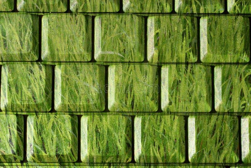 Grünes Gras als Tastatur stockfoto