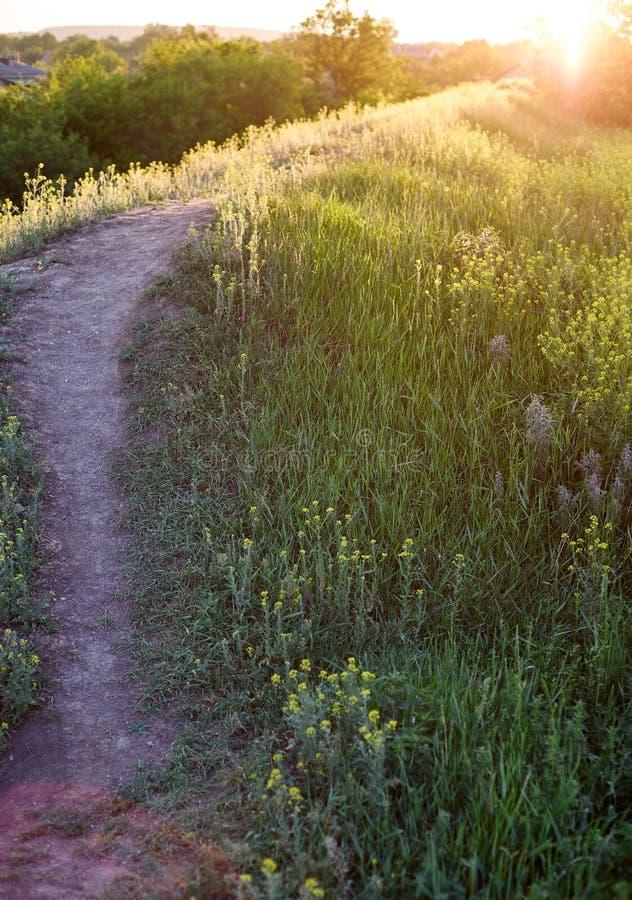 Grünes Gras auf dem Feld und ländliche Spur gegenüber von dem Sonnenuntergang stockfoto