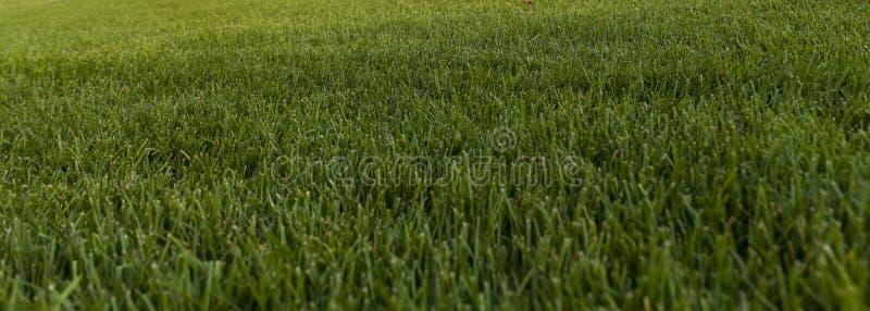 Grünes Gras auf dem Gebiet lizenzfreie stockbilder