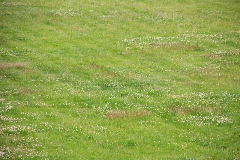 Grünes Gras auf dem Rasenabschluß oben, Hintergrund stockbilder