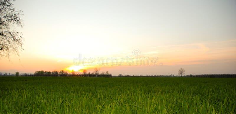 Grünes Gras auf dem Sonnenuntergang stockfoto