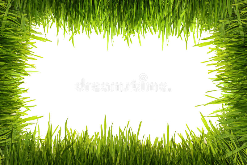 Grünes Gras auf einem weißen Hintergrund stock abbildung