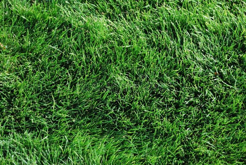 Grünes Gras auf Rasen stockfoto