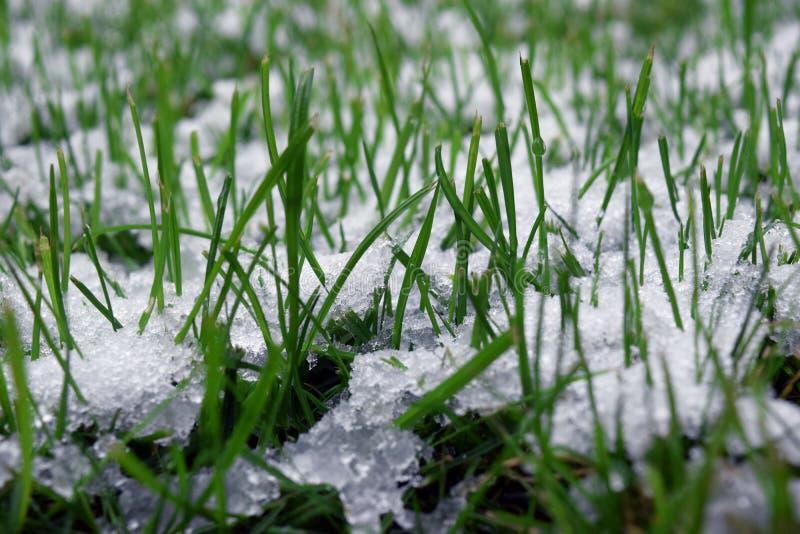 Grünes Gras, bedeckt mit weißem Schnee Hintergrund des gefrorenen Grases lizenzfreie stockfotos