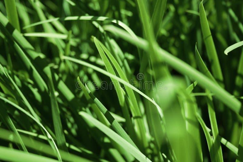 Grünes Gras-Blätter lizenzfreie stockfotos