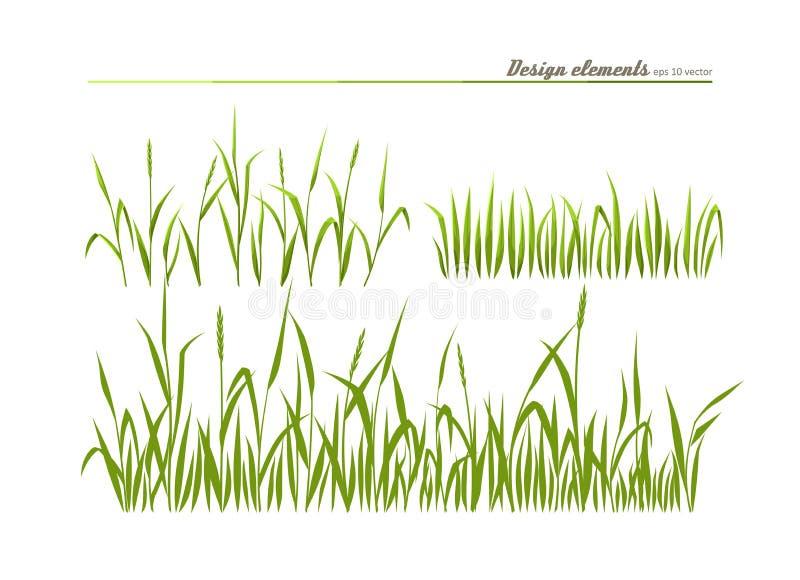 Grünes Gras der Wiese lizenzfreie abbildung