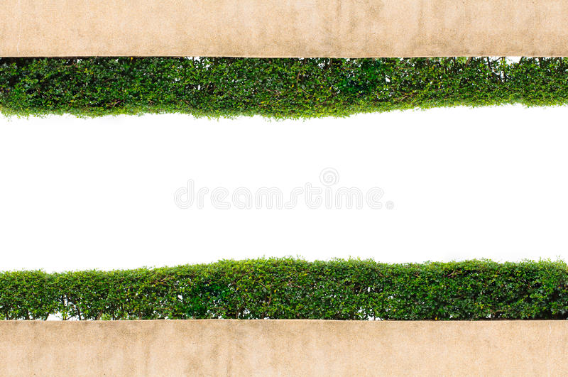 Grünes Gras des Feldes getrennt auf weißem Hintergrund lizenzfreies stockbild