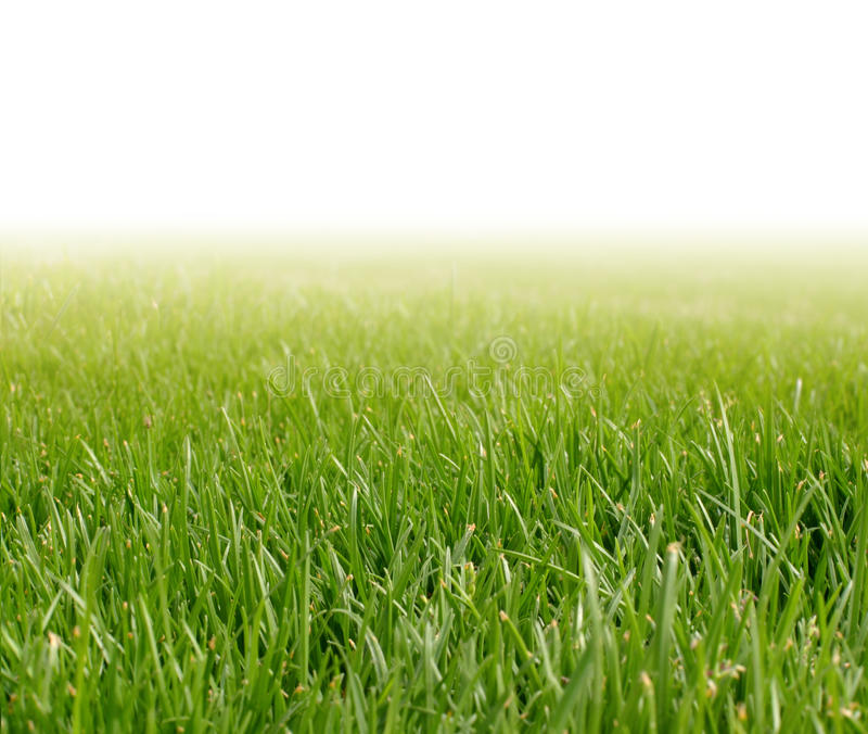 Grünes Gras des Frühlinges lizenzfreie stockfotos