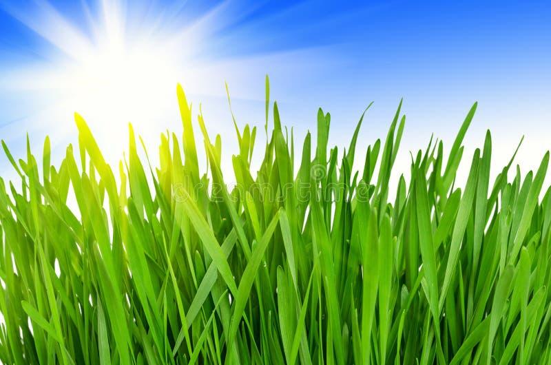 Grünes Gras des Frühlinges lizenzfreie stockfotografie