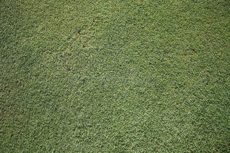 Grünes Gras des Golfs lizenzfreies stockfoto