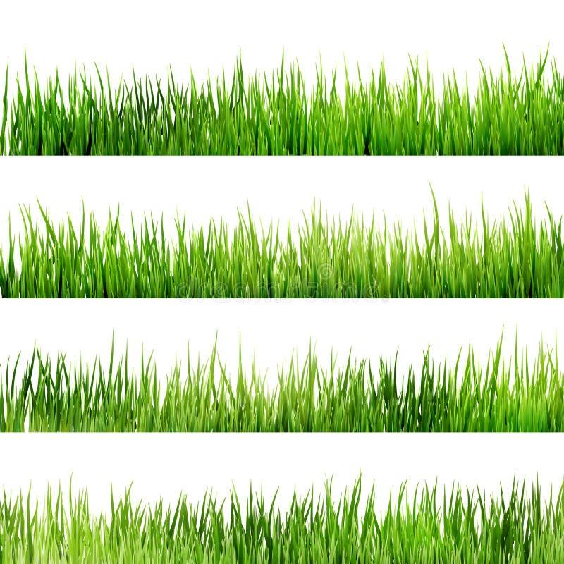 Grünes Gras des neuen Frühlinges lokalisiert auf Weiß. ENV 10 lizenzfreie abbildung