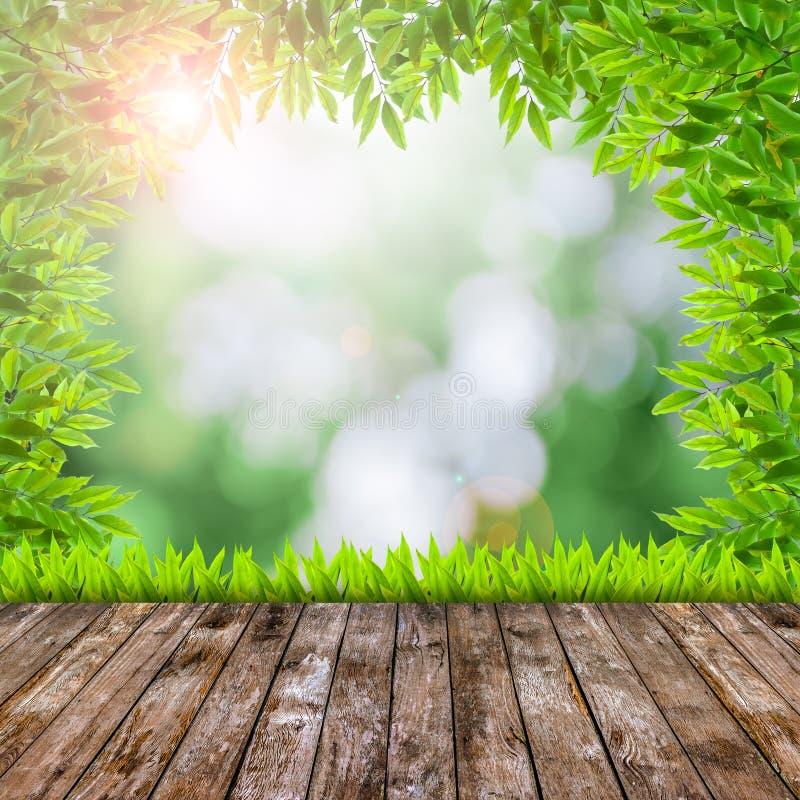 Grünes Gras des neuen Frühlinges mit grünem bokeh und Aufflackern und Holz flo stockfoto