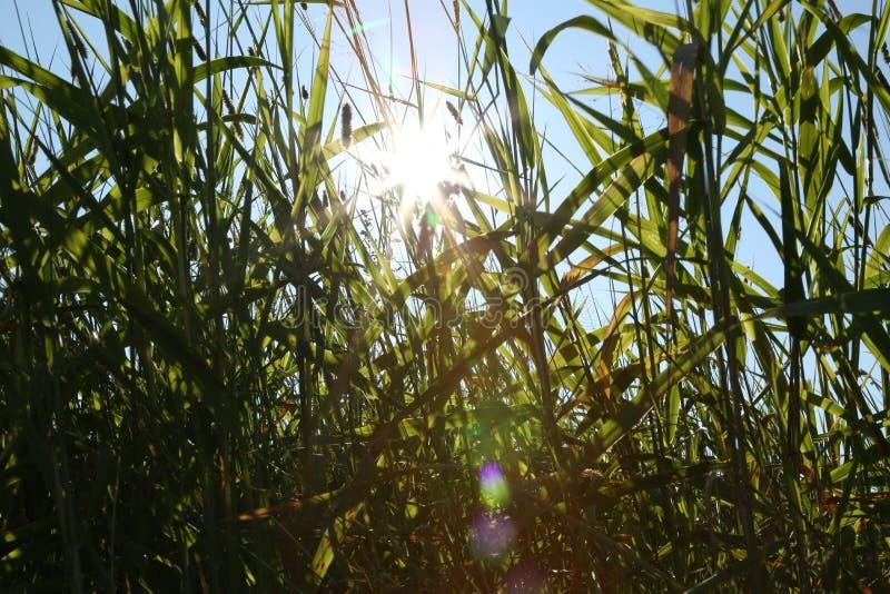 Grünes Gras des Sommers stockfotos