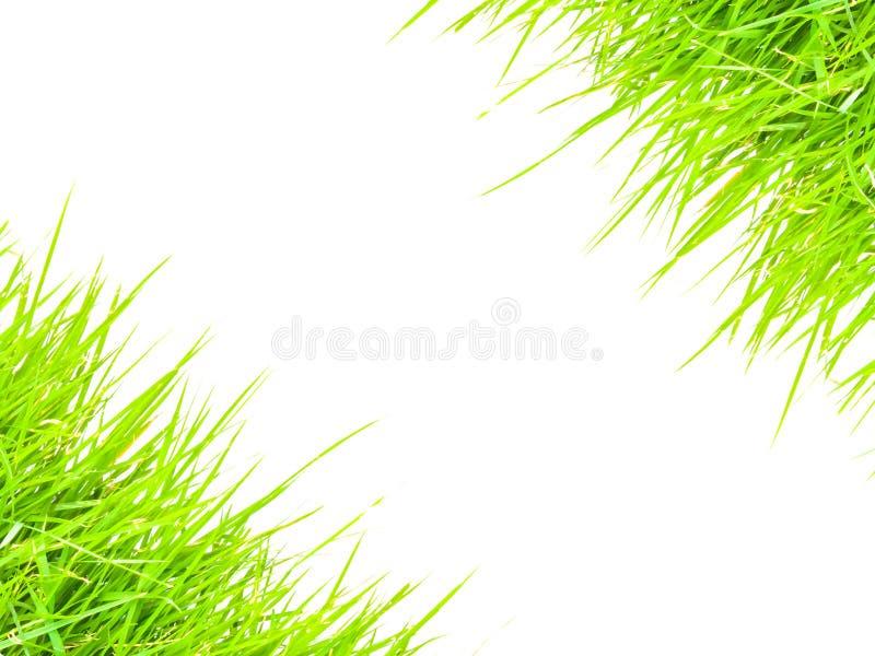 Grünes Gras für Textrahmen stockbild