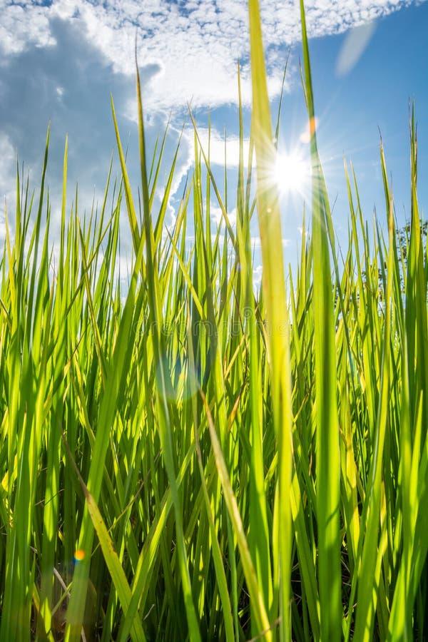 Grünes Gras fild Vertikale lizenzfreie stockbilder
