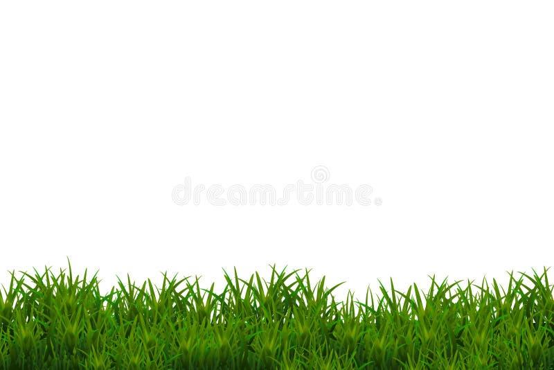 Grünes Gras getrennt auf weißem Hintergrund stockbild
