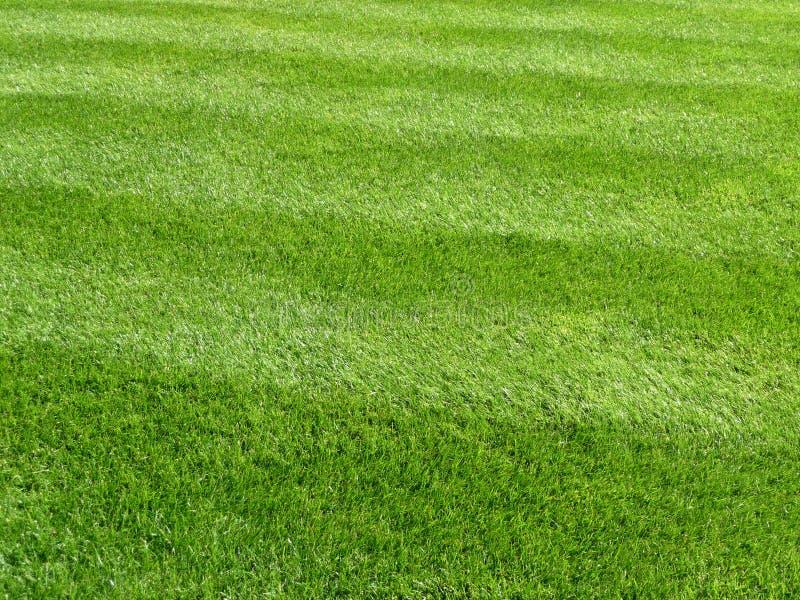 Grünes Gras-Hintergrund lizenzfreie stockfotos