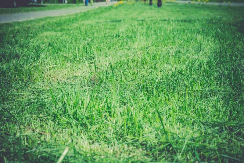 Grünes Gras im Park stockfoto