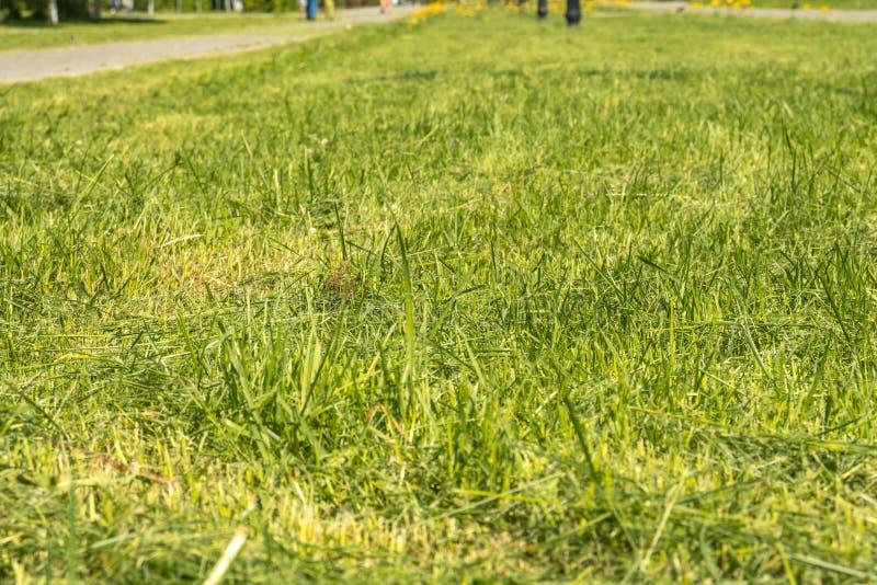 Grünes Gras im Park lizenzfreie stockfotos