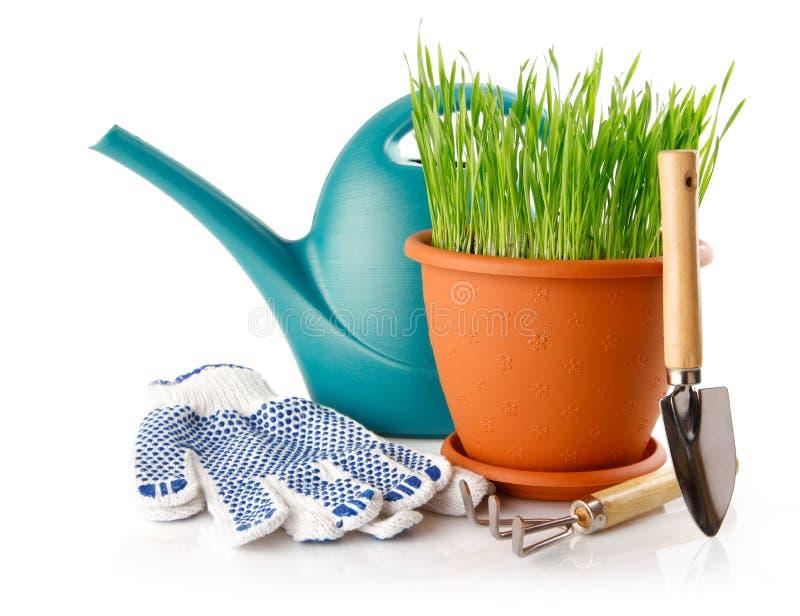 Grünes Gras im Potenziometer mit Schaufelhilfsmittel und -handschuhen lizenzfreie stockfotografie