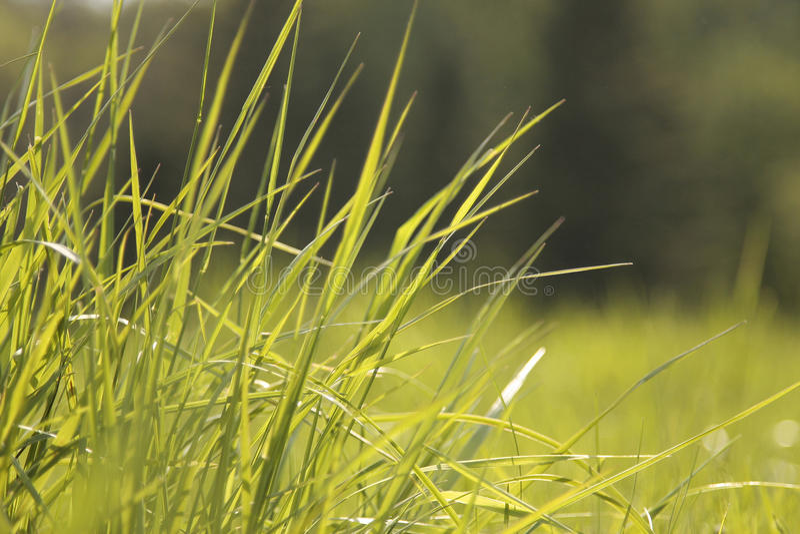 Grünes Gras im Sonnenschein stockbilder