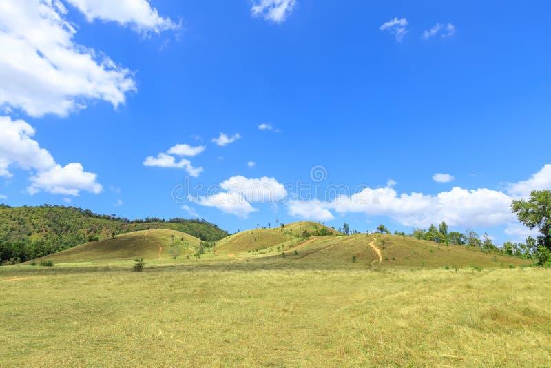 Grünes Gras am kahlen Hügelberg, szenischer Park in Ranong, Thailand lizenzfreies stockbild