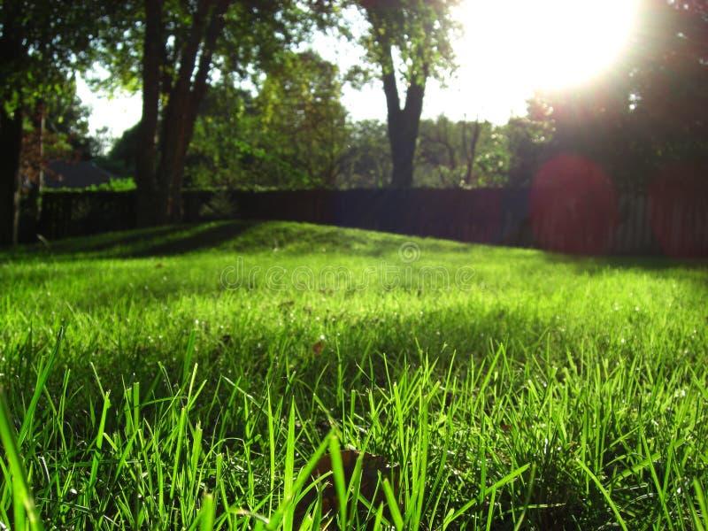 Grünes Gras-Landschaft stockfotos