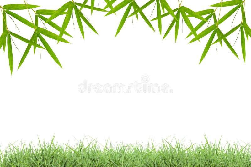 Grünes Gras mit Bambus lässt Rahmen lokalisiert auf weißem backgrou stock abbildung