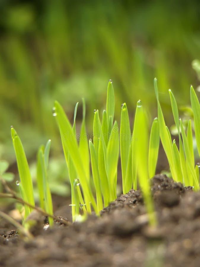 Grünes Gras mit Erde lizenzfreies stockfoto