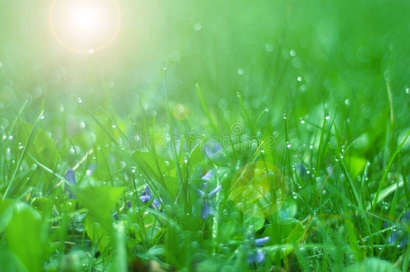 Grünes Gras mit Morgentau stockfotografie