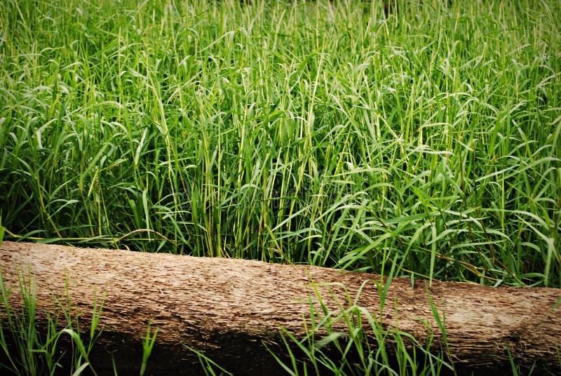 Grünes Gras mit Protokoll lizenzfreies stockfoto