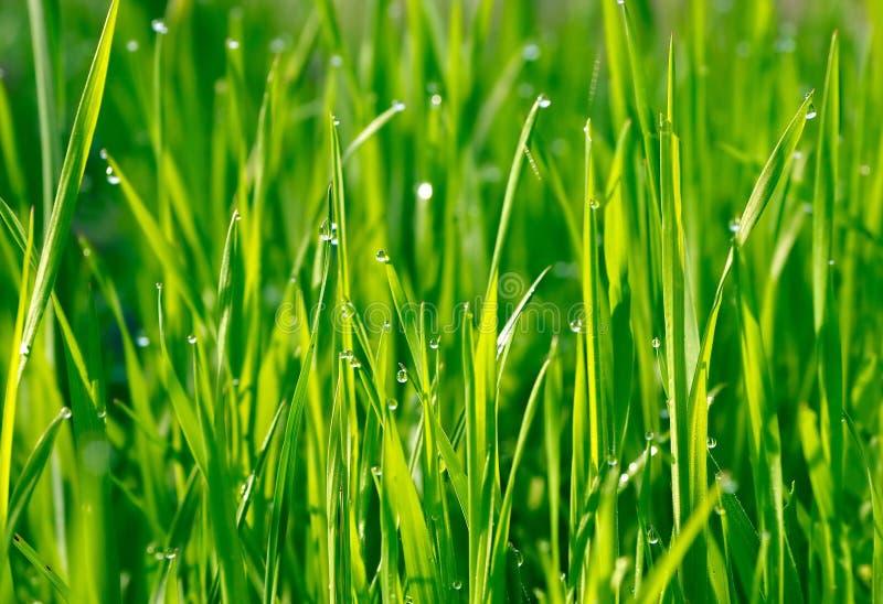 Grünes Gras mit Wassertropfen lizenzfreies stockbild