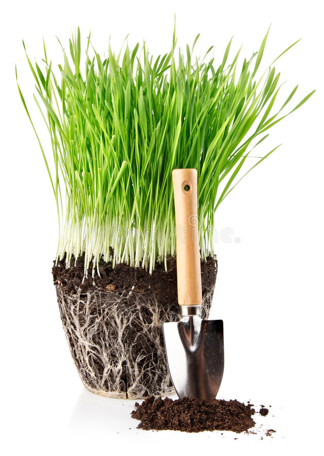 Grünes Gras mit Wurzeln im Boden- und Schaufelhilfsmittel lizenzfreie stockfotos