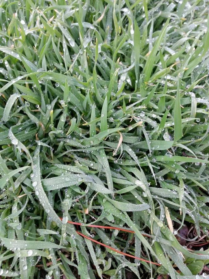Grünes Gras nach Regen stockfotografie