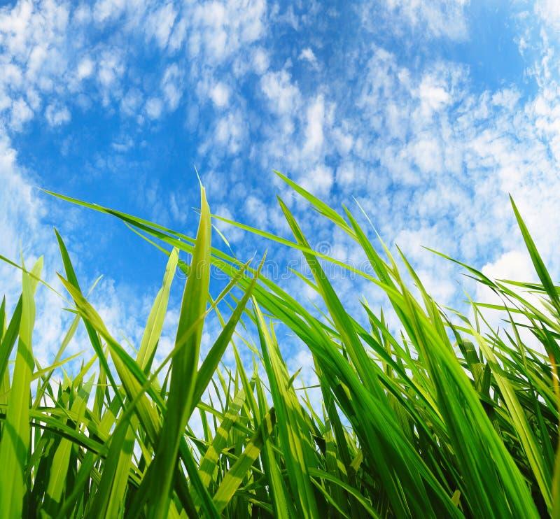 Grünes Gras, Umweltschutzkonzept lizenzfreie stockbilder