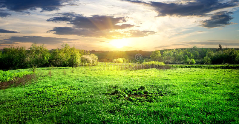 Grünes Gras und Bäume stockfotografie